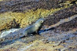 Seal Island (17)
