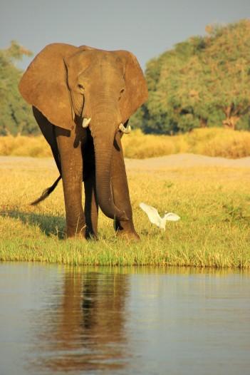 Sunset boat ride on the Zambezi (21)