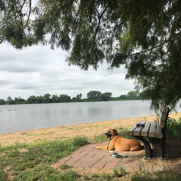 Tillie by the lake